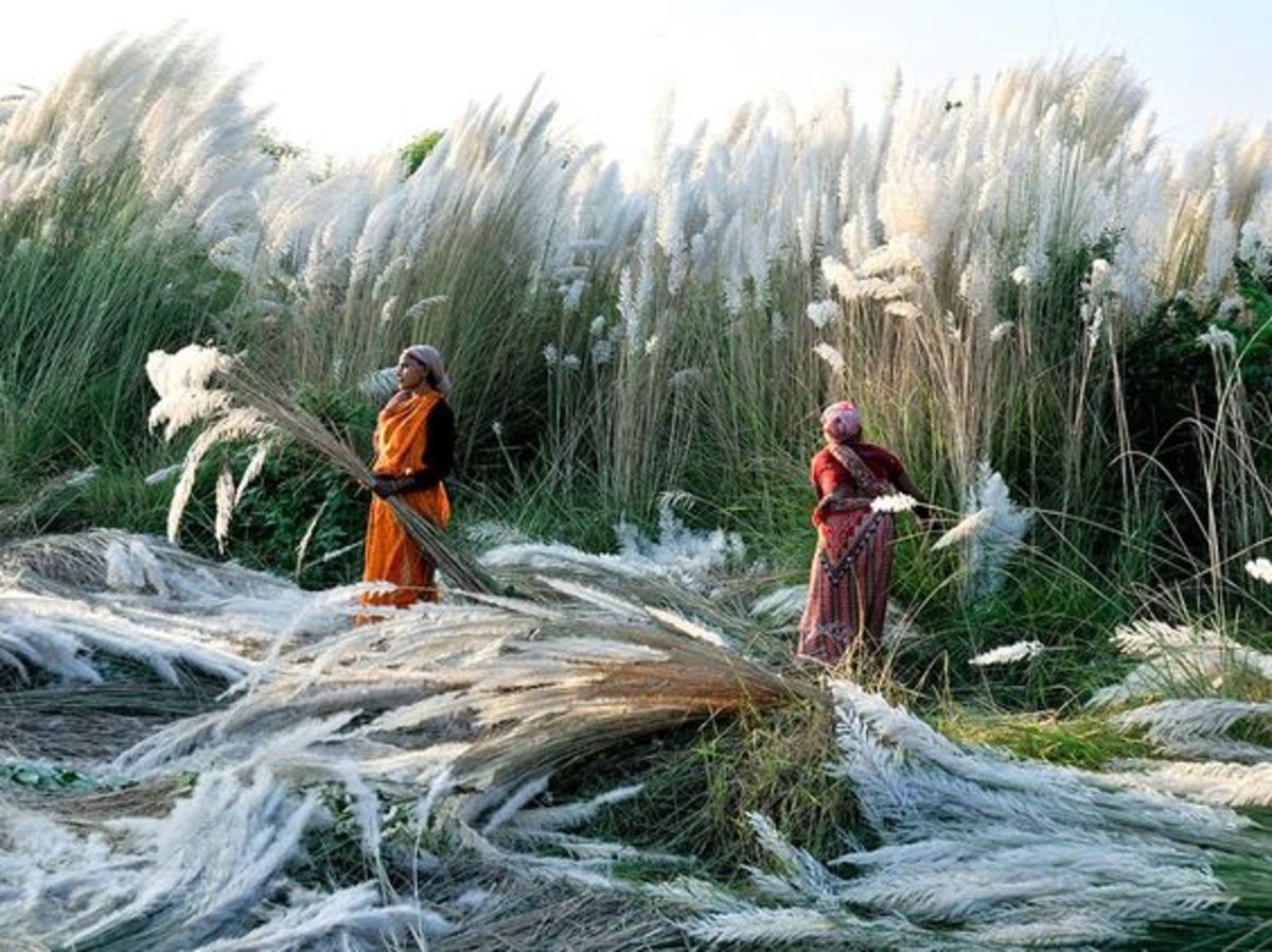 Start of harvest cultivation in India