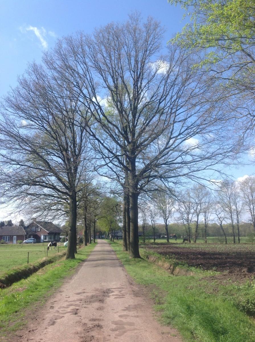 Lane: Small Dutch Country Village