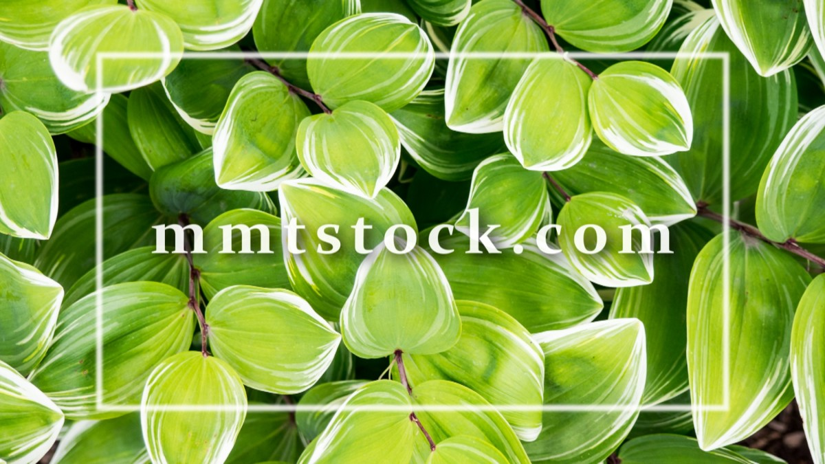 10 Free Stock Photo Websites: Royalty Free Images for Bloggers | MMT