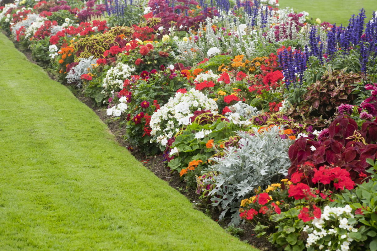 A beautiful flower bed
