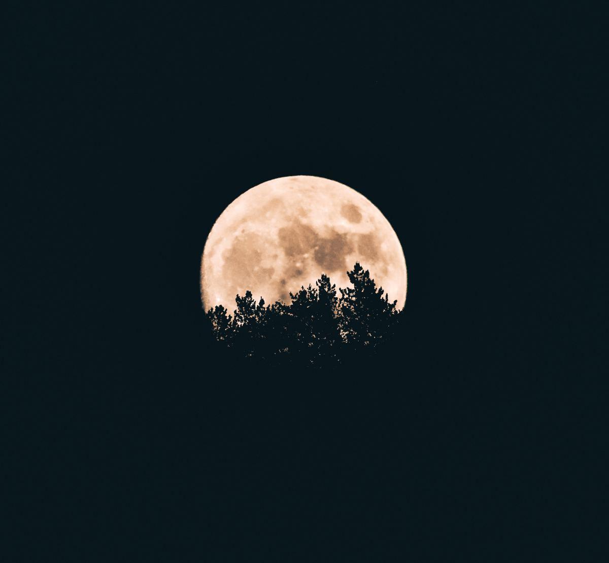 Shy moon hiding behind the trees!