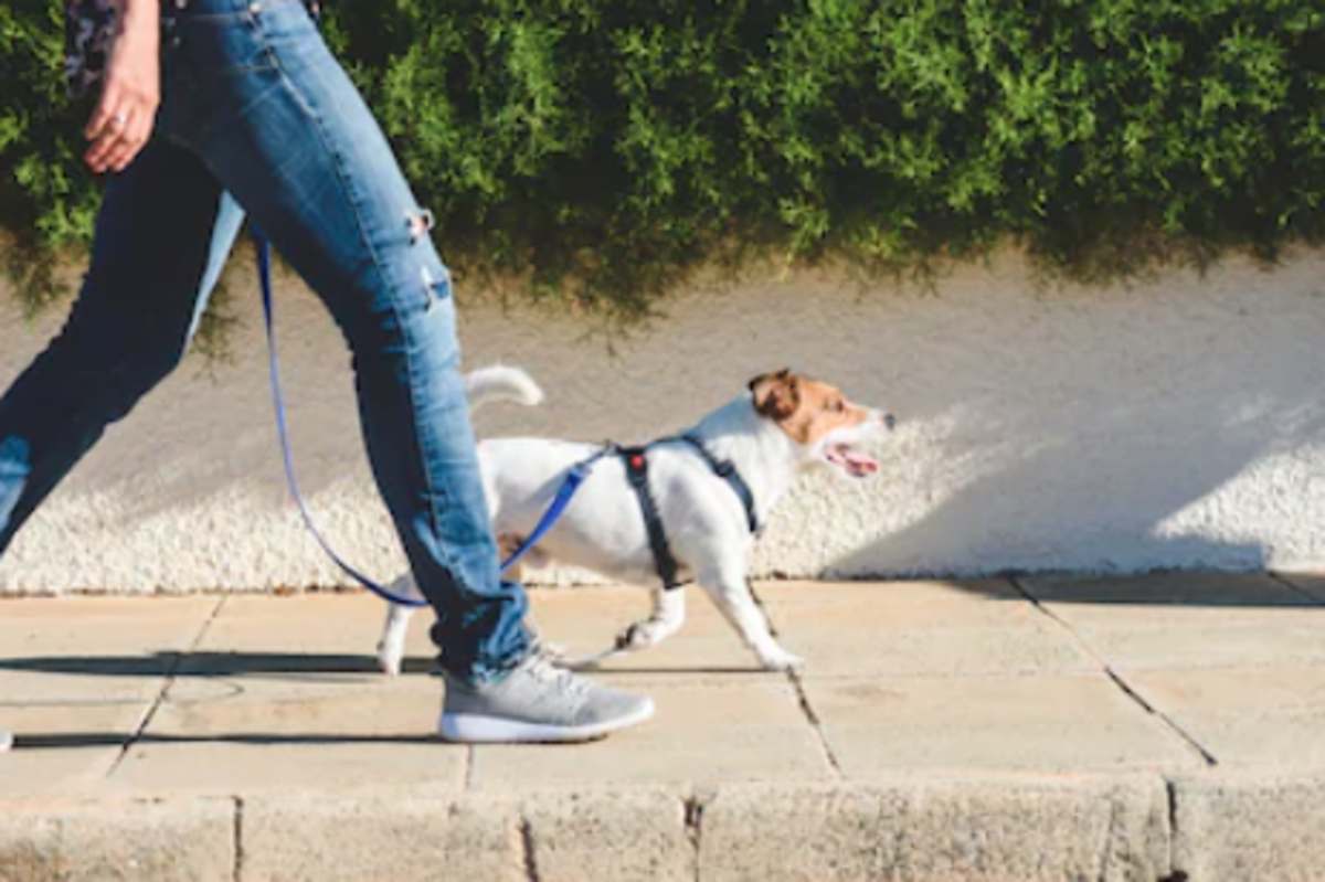 Figure 6. A dog walk can be a fun exercise