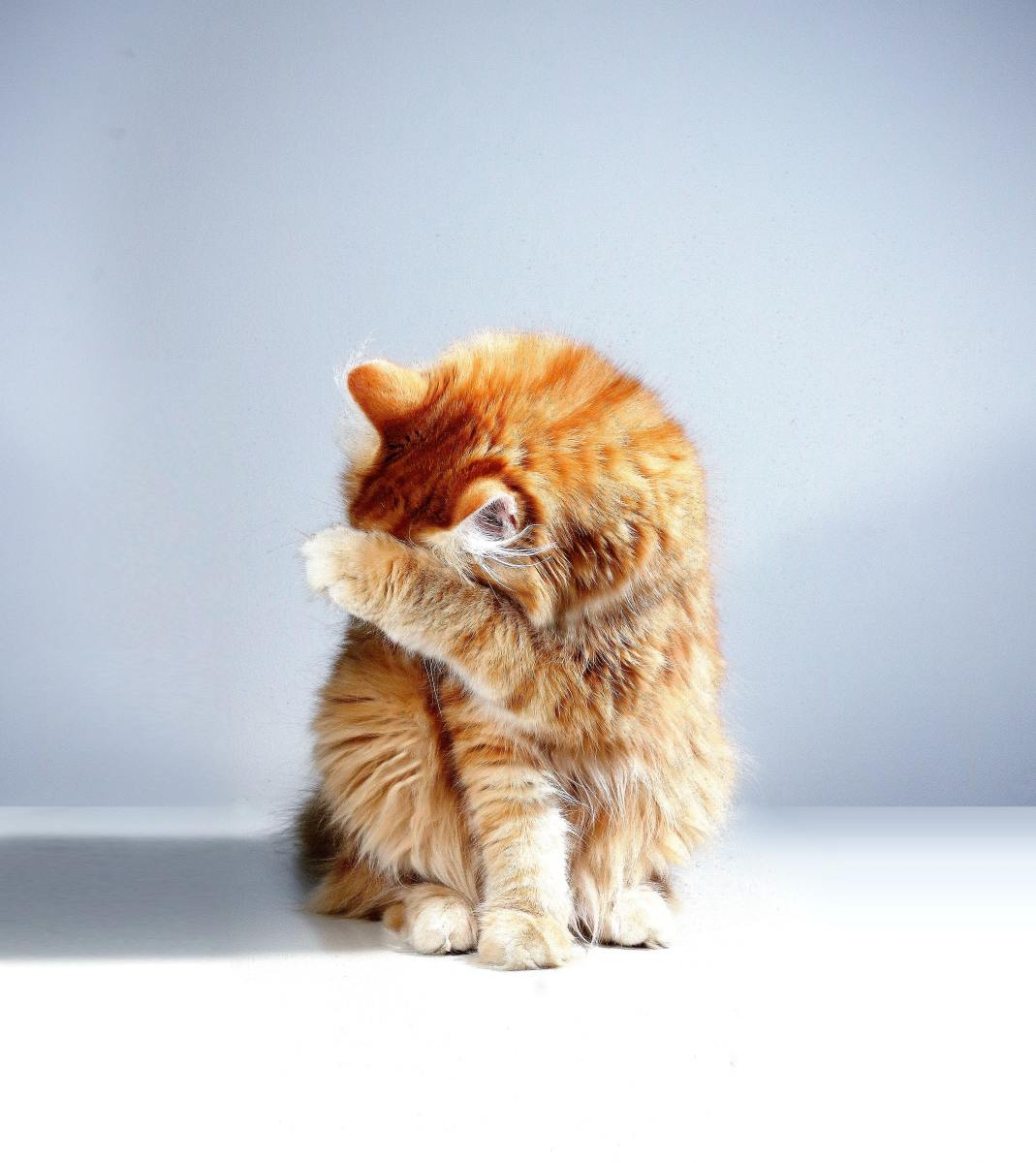Is Your Cat Crazy? Learn the Body Language of Cats and Find Out!