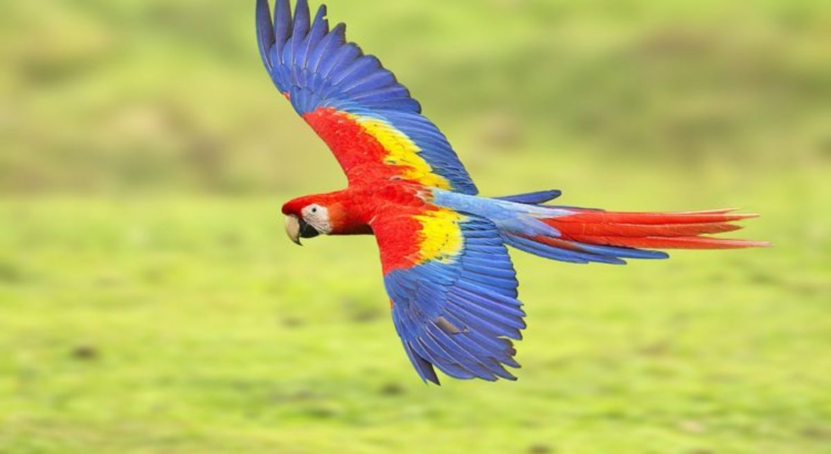 10-most-beautiful-birds-in-the-world