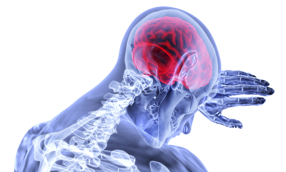 The Fascinating Brain