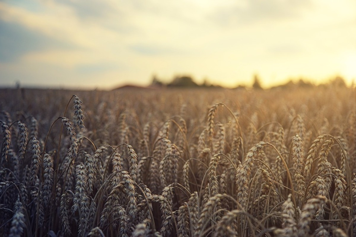 Reaping and Sowing, How the Harvest Works in God's Kingdom