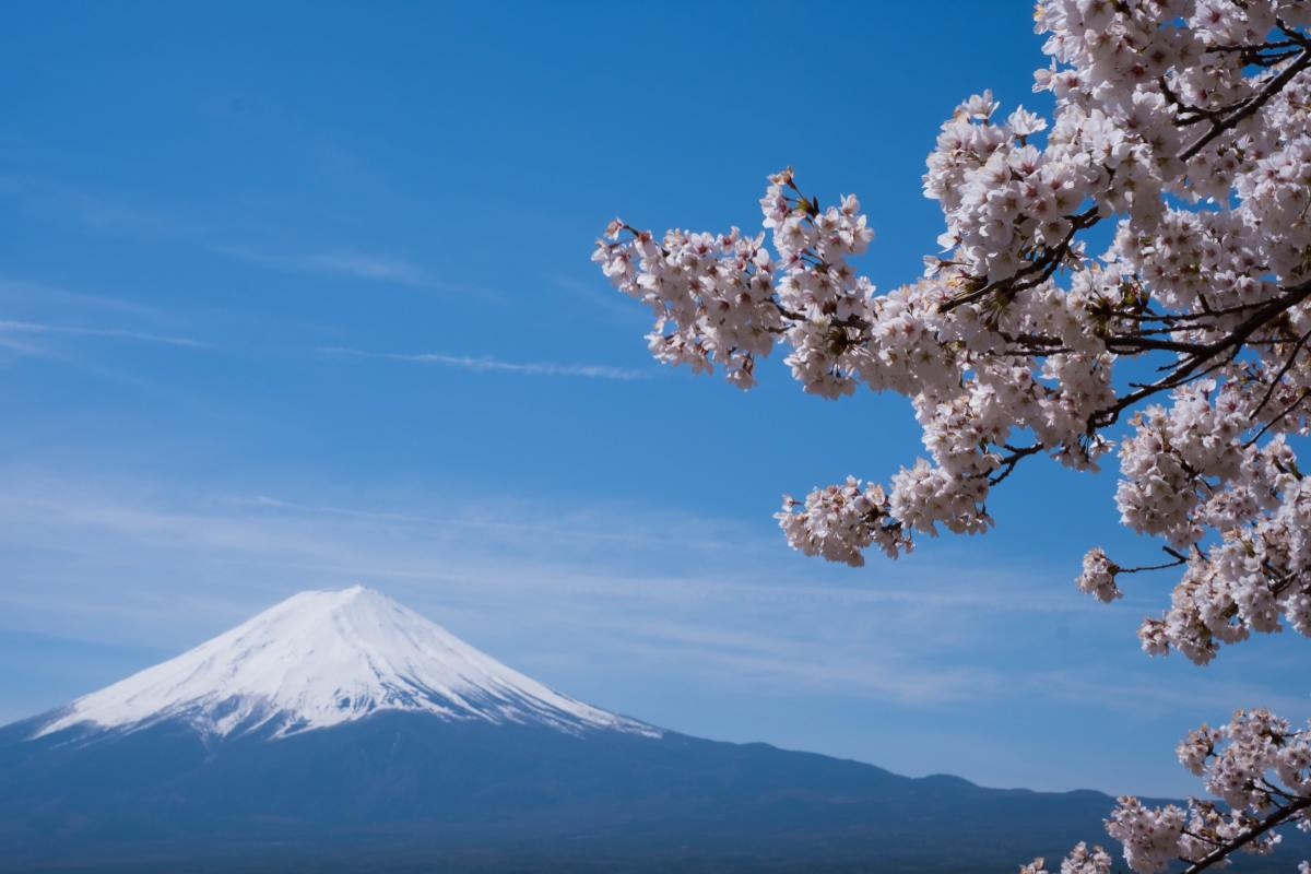 Mount Fuji and Sakura