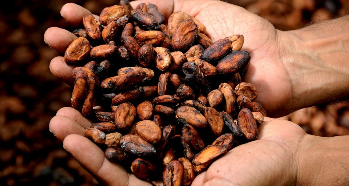 Is Raw Cacao Dangerous? How to Use This Superfood Safely