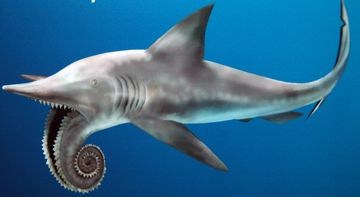 A Monster Helicoprion