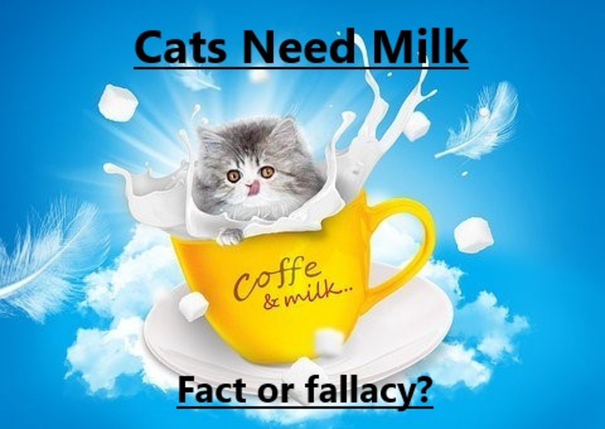 Cat and milk seem like a dreamy combination. But is it just a fallacy?
