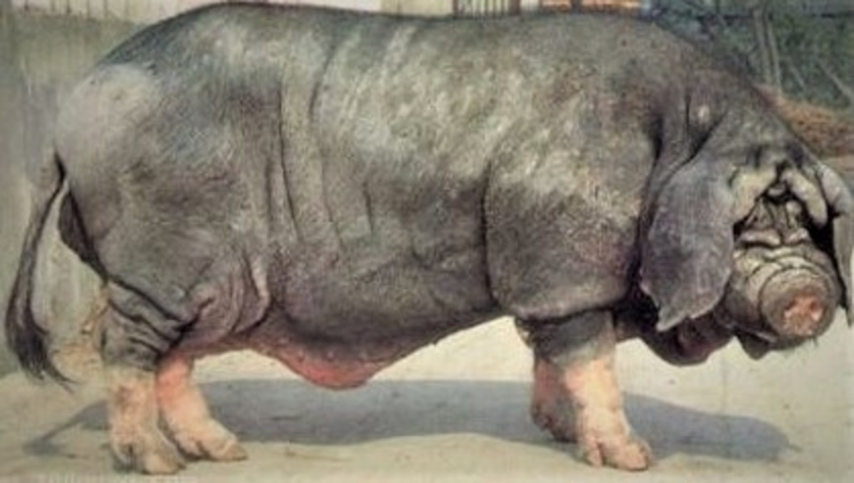 the-top-25-ugliest-animals