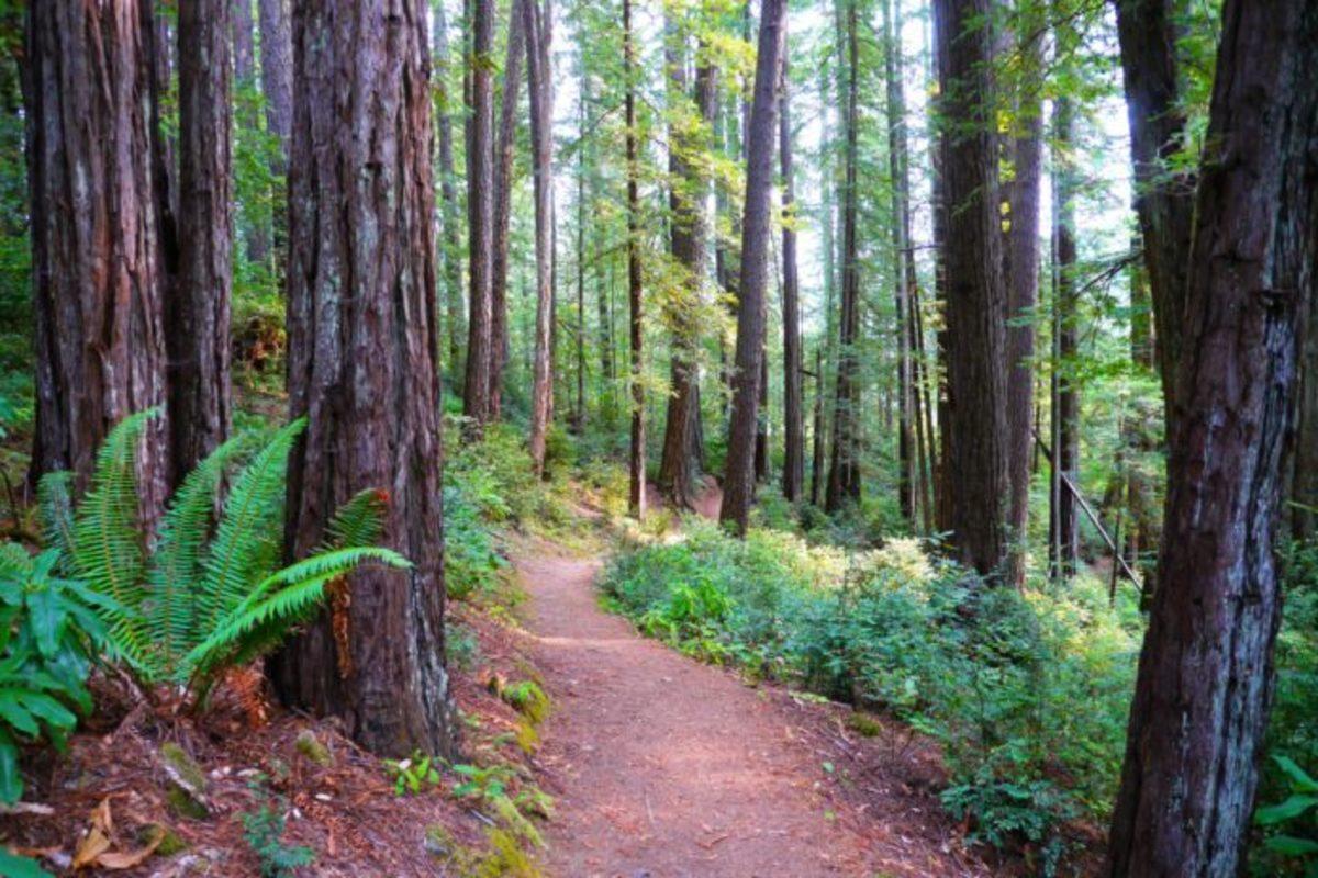 OregonRedwood Forest