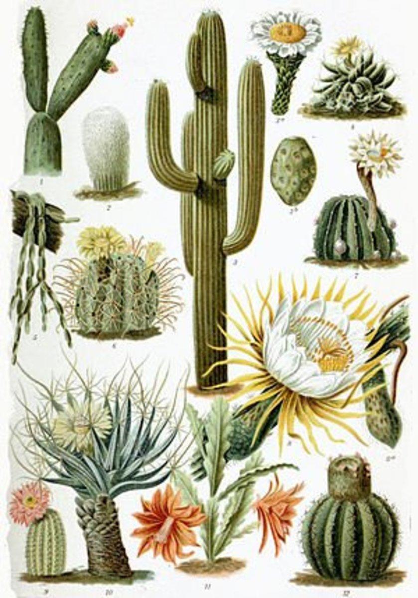 Various Cactus