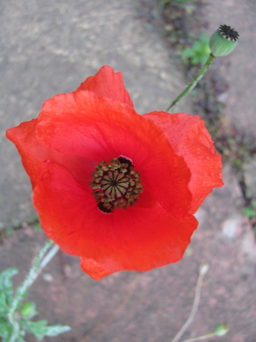 Poppies to remind us of the futility of war.
