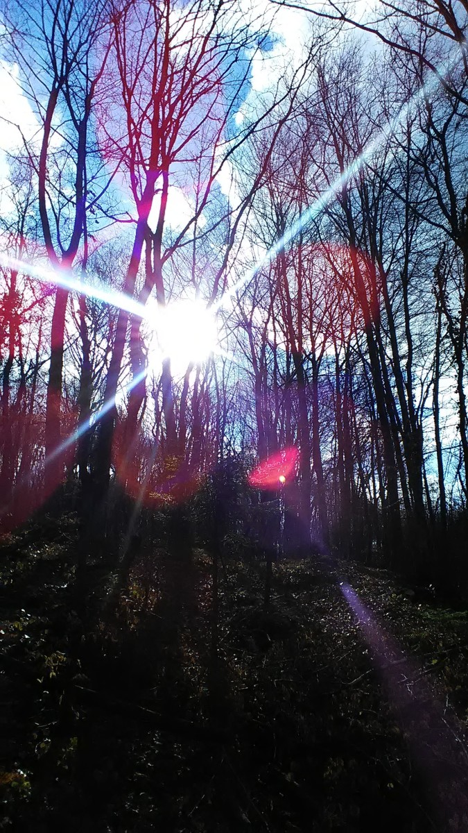 song-in-the-woods