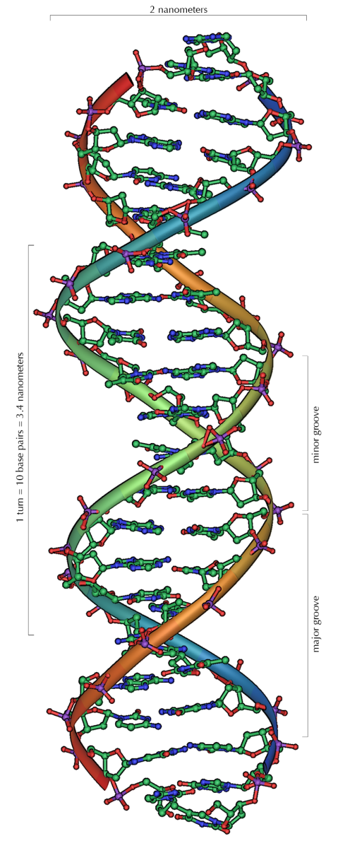 DNA Replication: The Basics