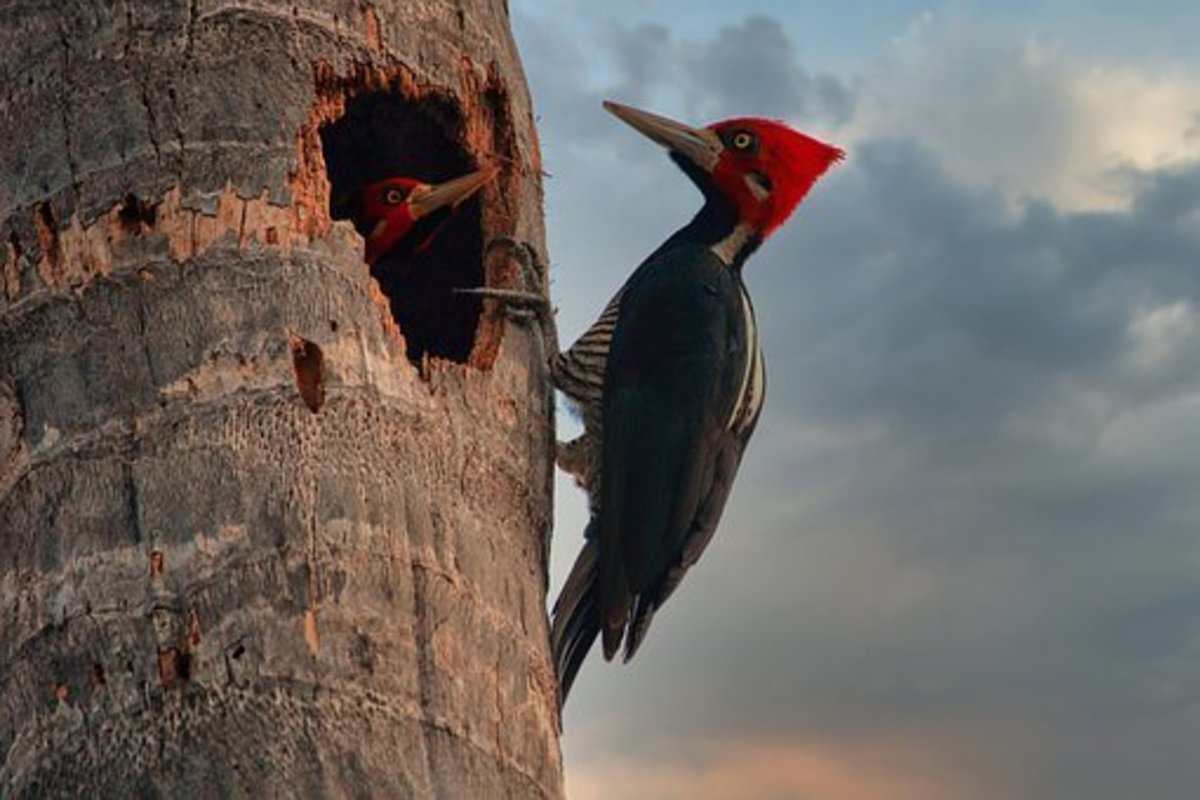 interesting-facts-about-woodpeckers