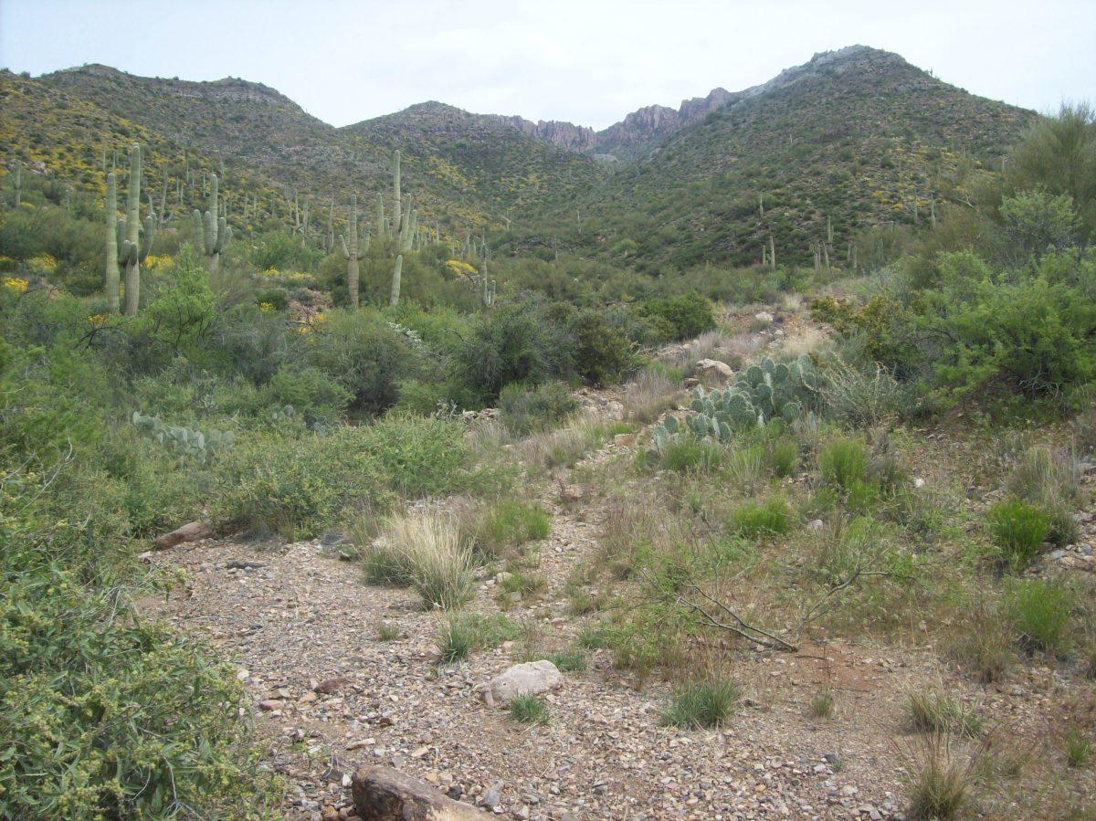 The trail split.