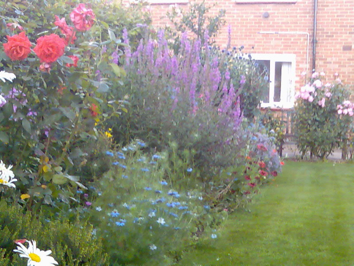 A mixed border of shrubs, perennial, and annual plants. There is a lawn in my father's garden, though this is not a traditional component of a cottage garden