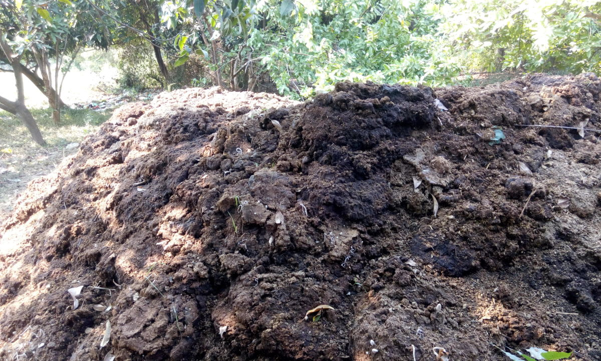 What Are the Different Types of Compost and Which Should I Use in My Garden?