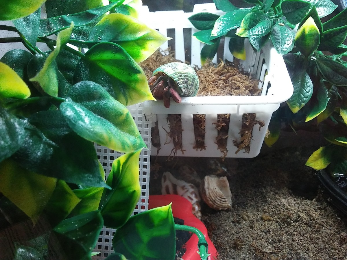Moss pit made from a simple plastic basket hung on Command hooks, with vines and piece of plastic canvas attached with zip ties for ladders.