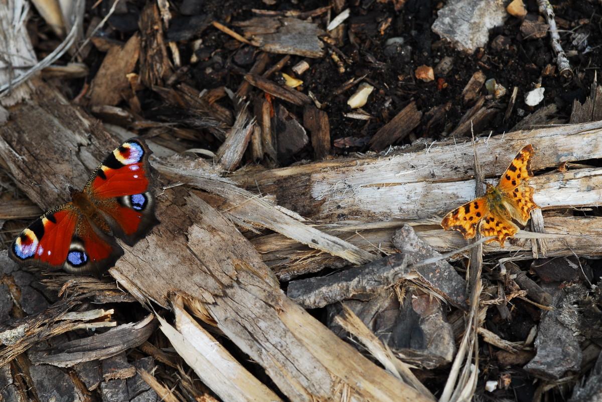 Side by side two Butterflies soak up the sunshine