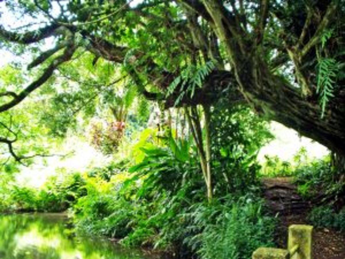 Edens Garden:  Image by Jenny W. (http://www.sxc.hu/profile/emsago)