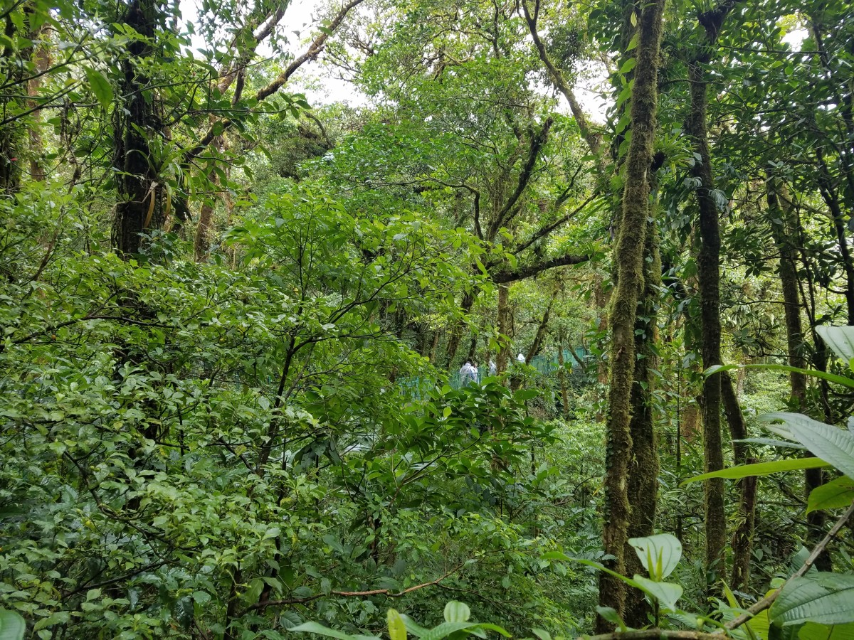 Costa Rica Adventure: Exploring Monteverde & The Cloud Forest