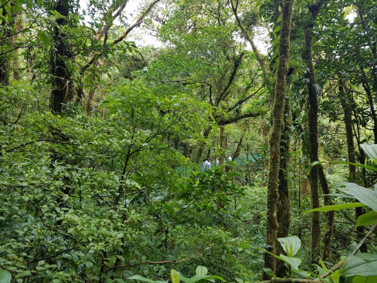 Costa Rica Adventure: Exploring Monteverde & The Cloud Forest