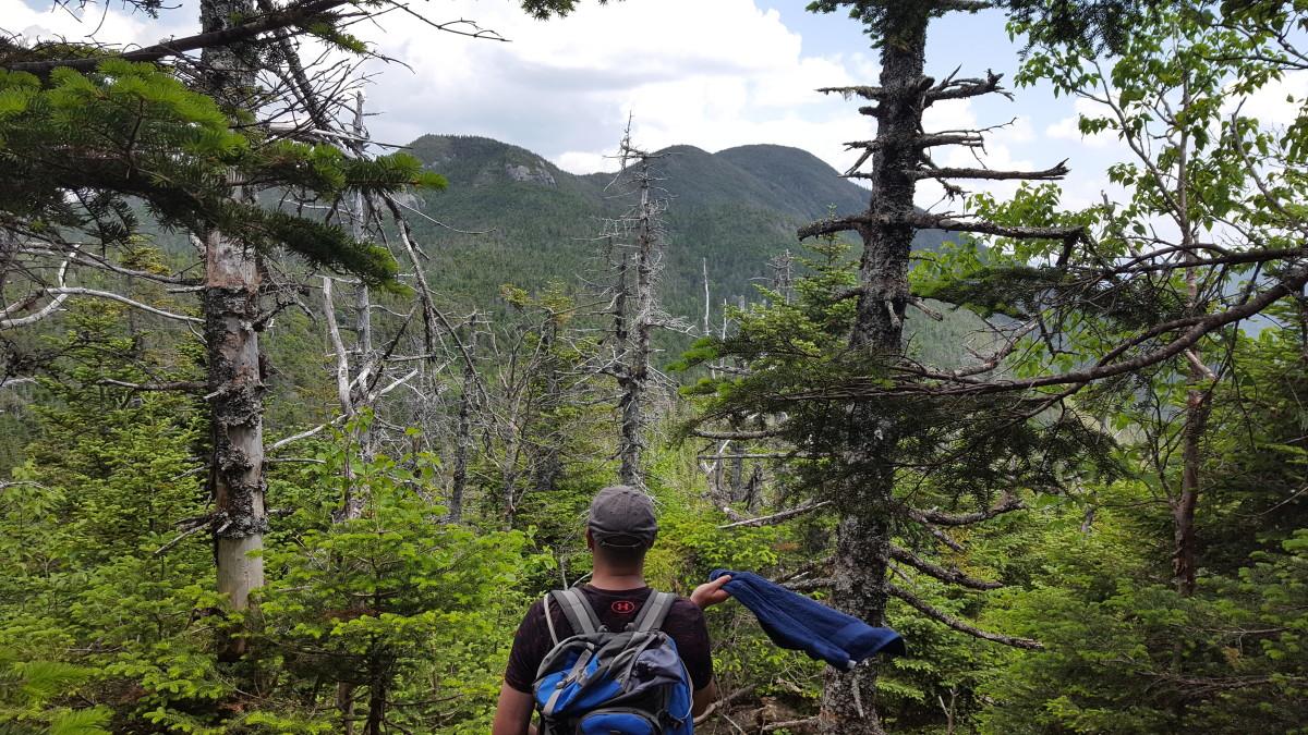 Views of Seward from the Climb