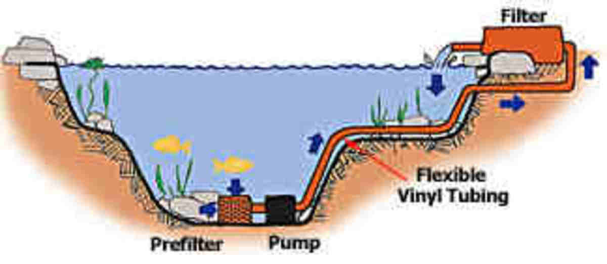 What You Need To Know About Pond Filtration Systems Hubpages