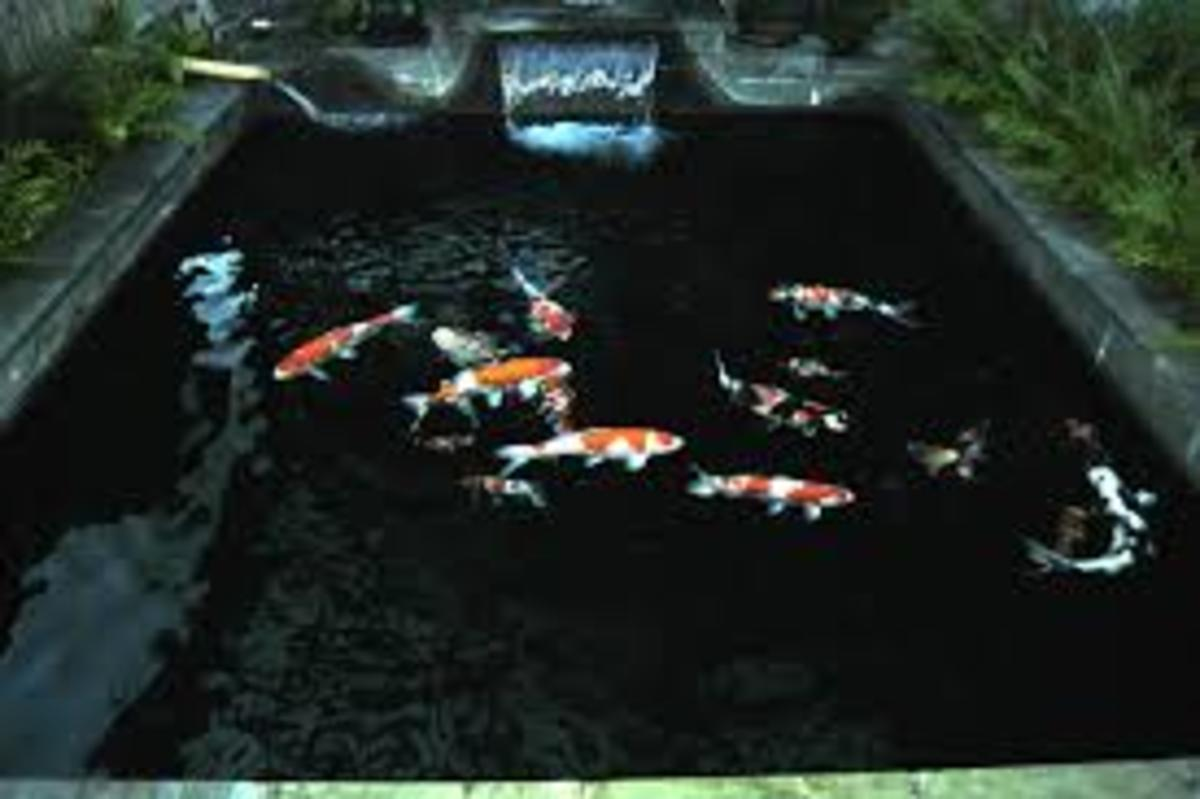 Koi pond filtration