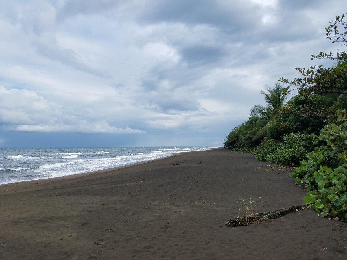 Dark Sand Beach, Caribbean Side Of Costa Rica, Tortuguero