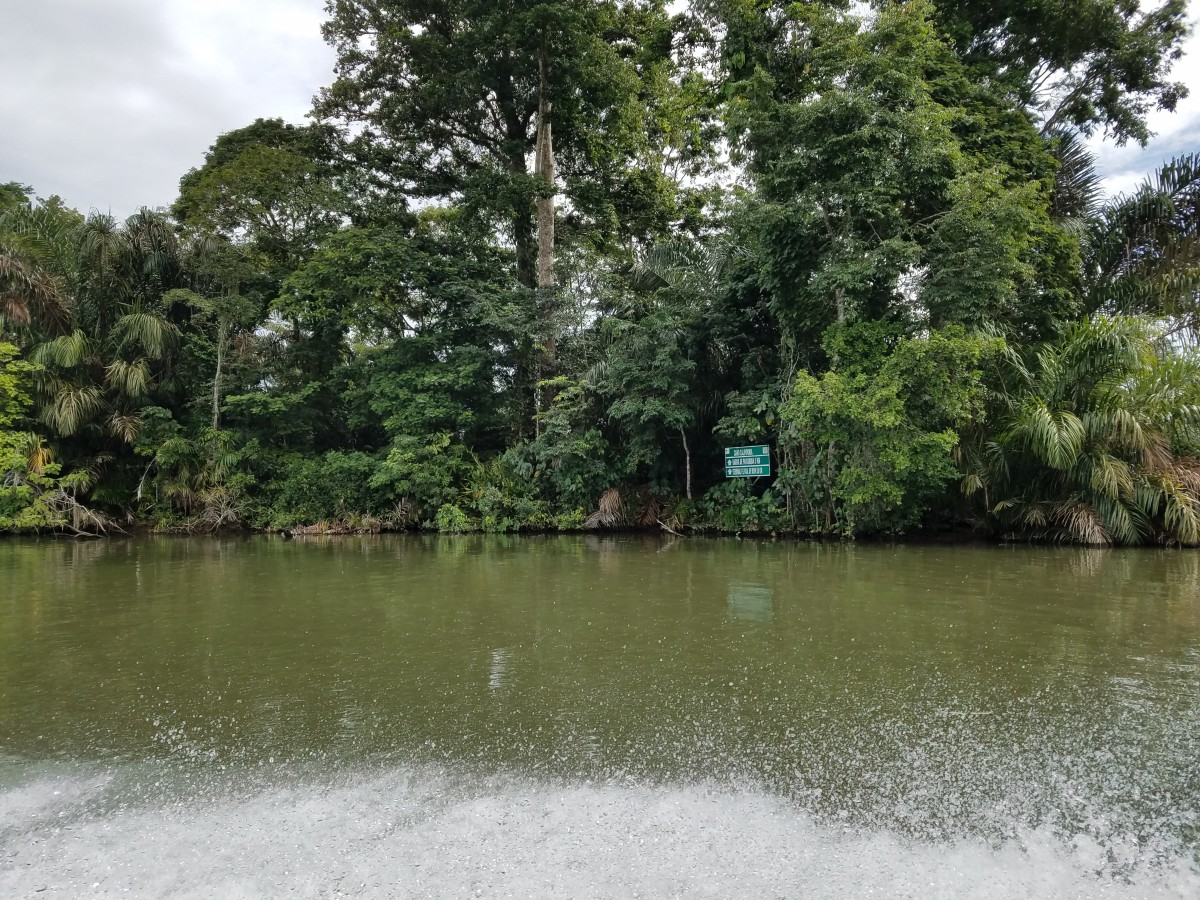 Canal In Tortuguero National Park