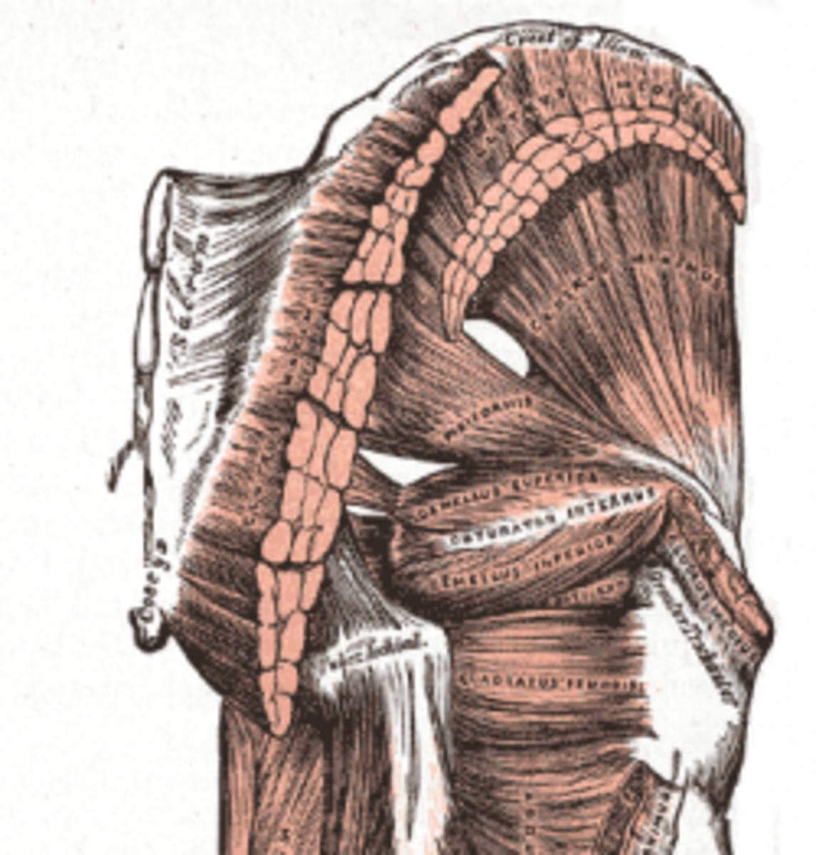 human-anatomy-lesson-24