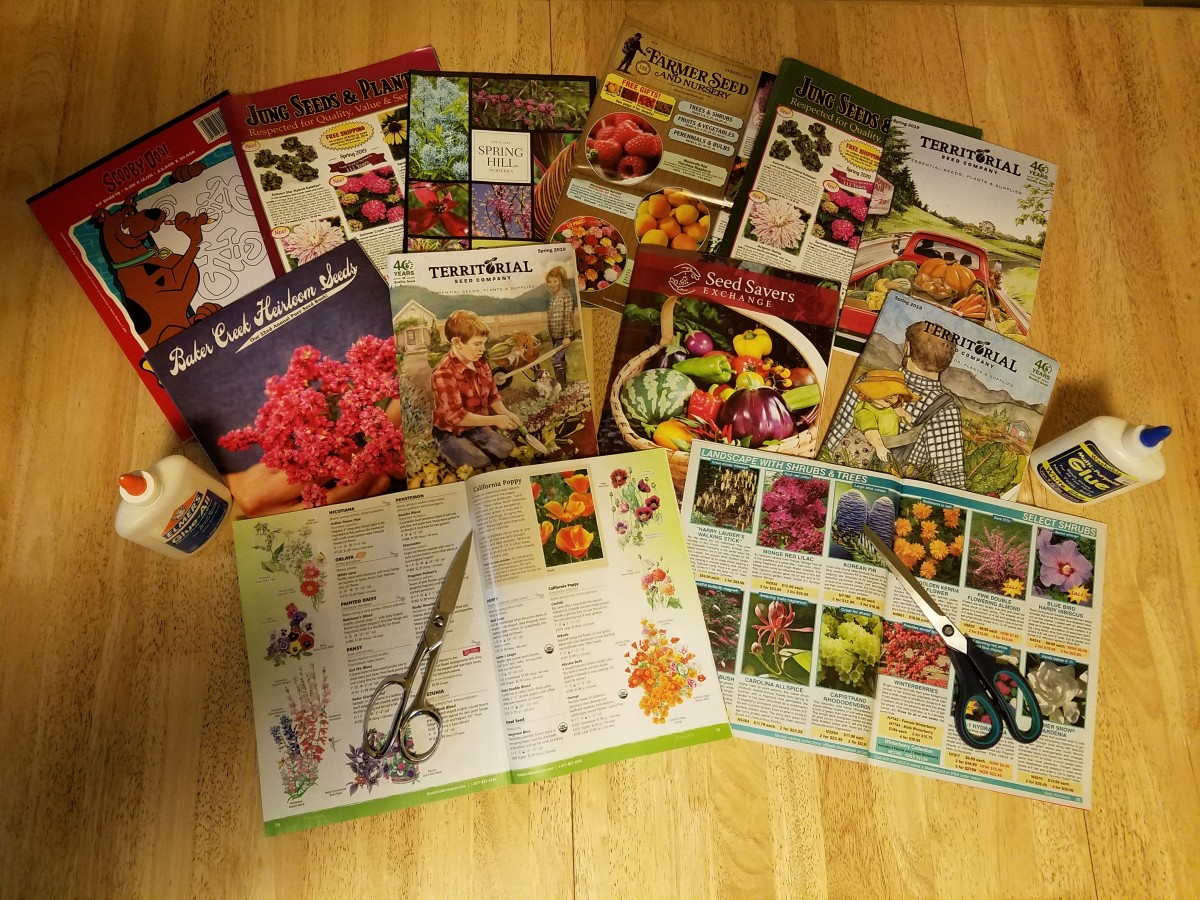 Use old plant and seed catalogues to make a garden collage.