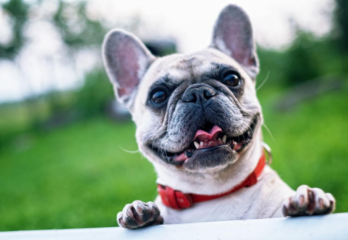 top-10-kid-friendly-dogs
