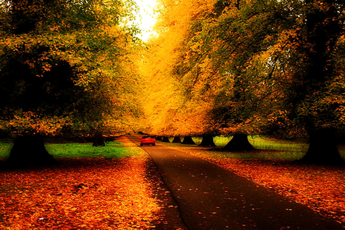 Autumn: A Time to Revisit Memories