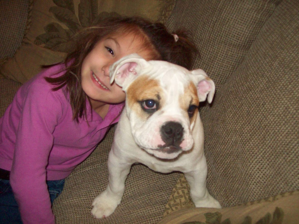 Bulldogs are sweet, gentle, good-natured dogs.