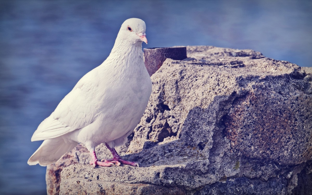 This article provides information about the names of different types of birds in Portuguese.