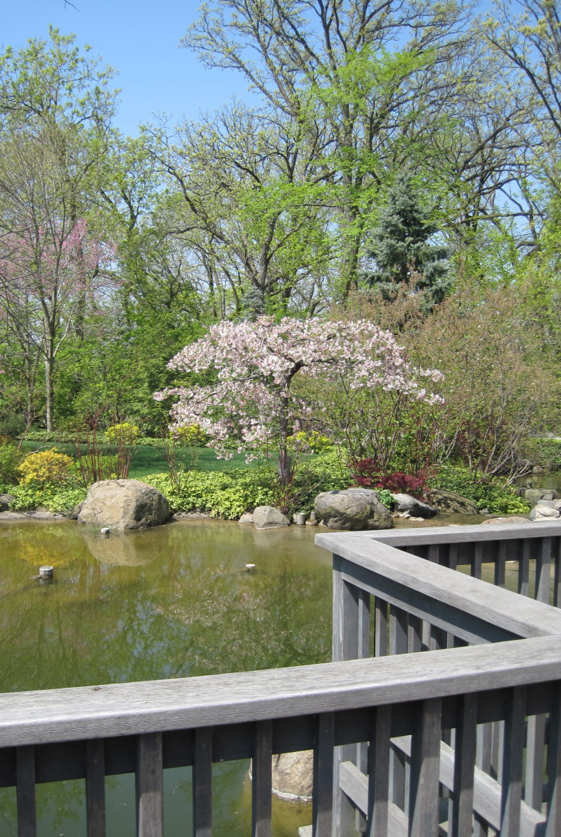 anderson-japanese-gardens-a-tribute-to-nature