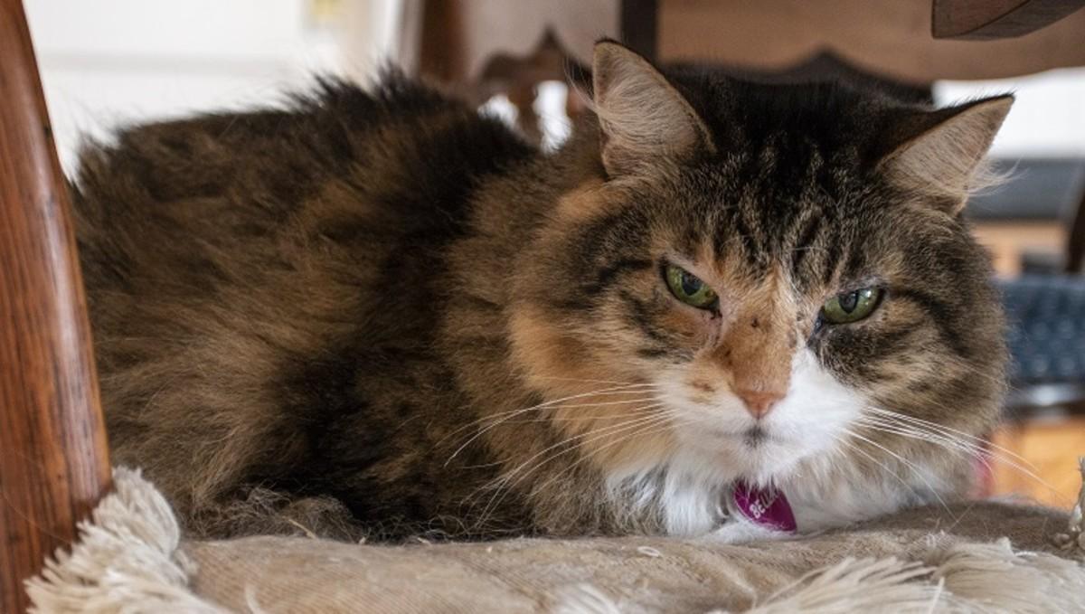 Senior female cat.