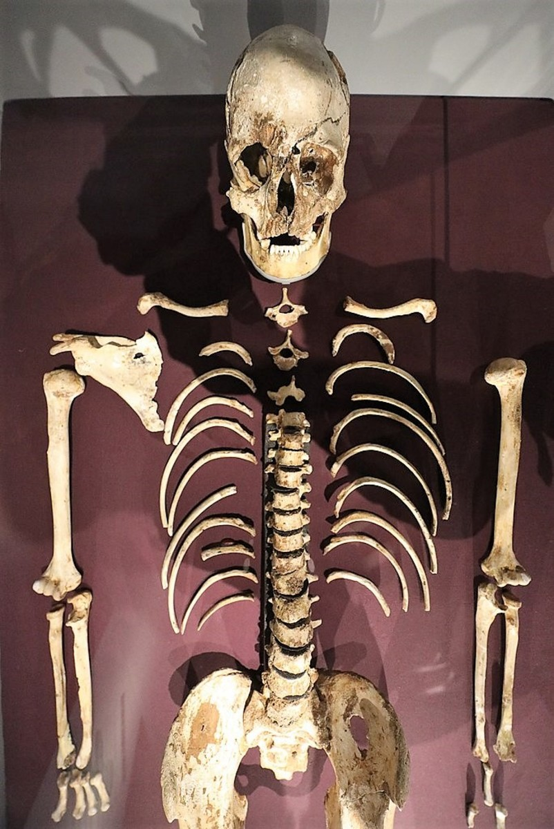 The upper body of Cheddar Man