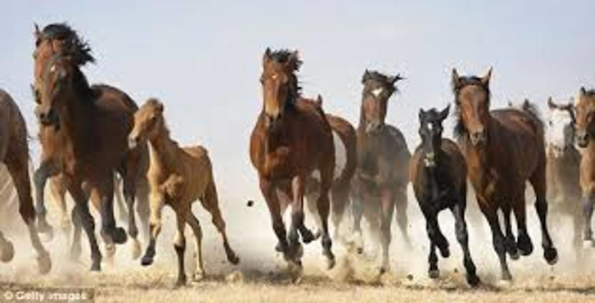 horses-an-exceptionally-important-commodity-in-early-atlantic-trade