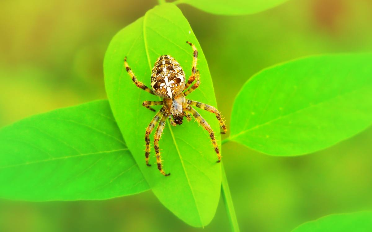 Spiders play an important role in maintaining a healthy ecosystem.