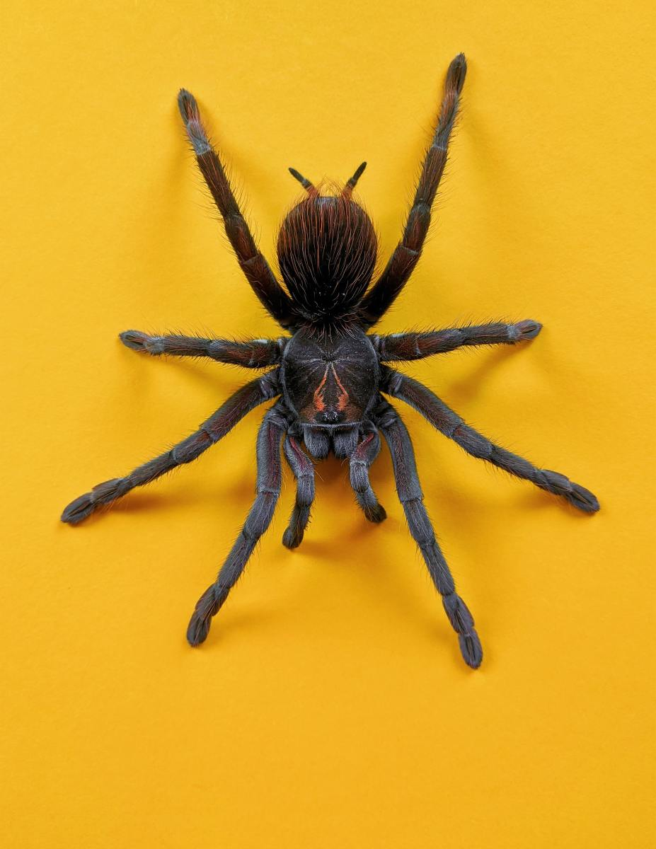 Why Are Humans Afraid of Spiders?