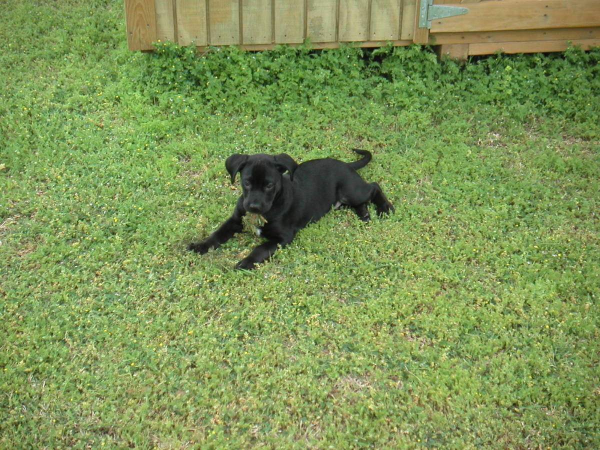 As a puppy, he loved to eat clumps of grass.