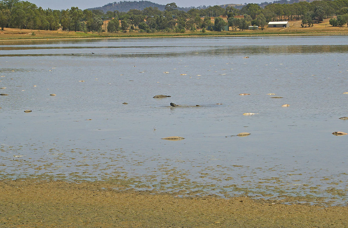 Lake Albert (notice the dead or dying fish)