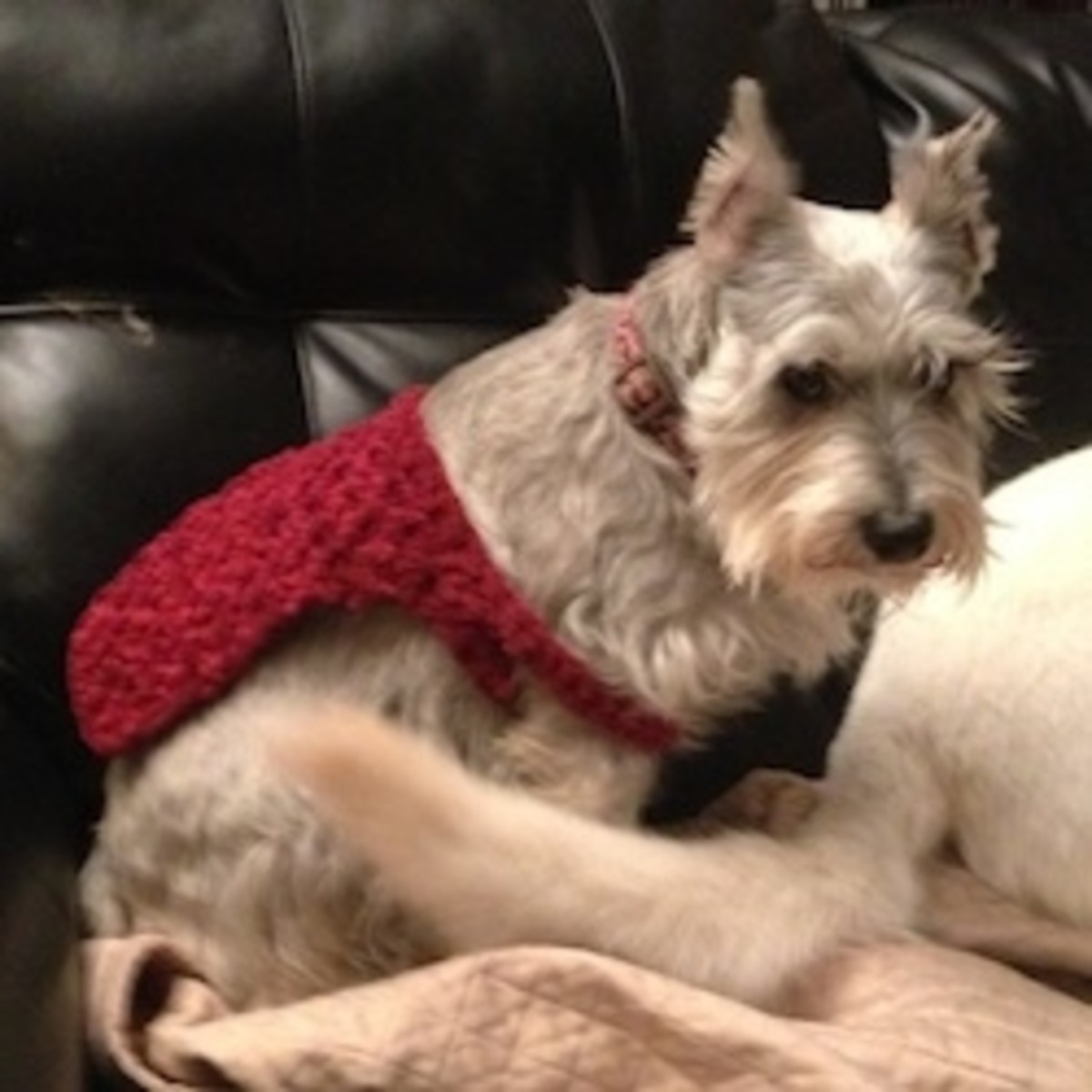 Winnie Had To Try On Bailey's Sweater Too!