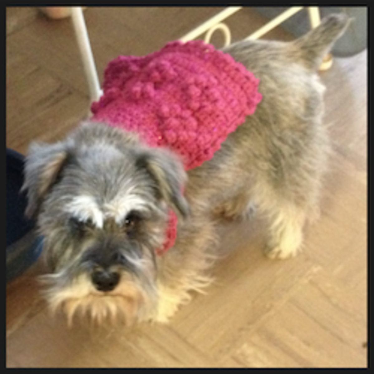 World's Easiest Custom Fit Dog Sweater Free Crochet Pattern! Stay-Put Design!